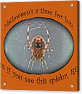 Halloween Greeting Card - Marbled Orb Weaver Spider Acrylic Print