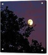 Halloween Moon 2009 Acrylic Print
