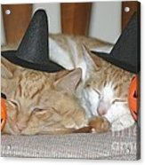 Halloween Party Animals Acrylic Print