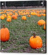 Halloween Pumpkin Patch 7d8383 Acrylic Print by Wingsdomain Art and Photography