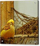 Halloween Yellow Bird Acrylic Print