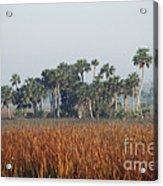 Hammock, Everglades National Park Acrylic Print