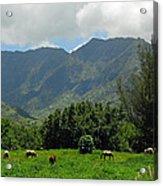 Hanalei Horses Acrylic Print
