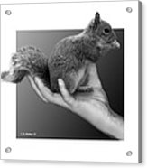Hand Full Of Squirrel Acrylic Print