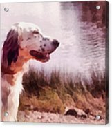 Handsome Hunter. English Setter Acrylic Print by Jenny Rainbow