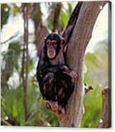 Hanging Around Acrylic Print