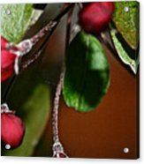 Hanging By A Stem Acrylic Print