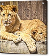 Hanging Out Acrylic Print
