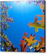 Happy Autumn Acrylic Print