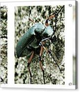 Happy Beetle Acrylic Print