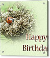 Happy Birthday Greeting Card - Ladybug On Dried Queen Anne's Lace Acrylic Print
