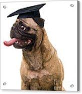 Happy Graduation Acrylic Print