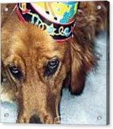 Happy Happy Birthday Buddy Acrylic Print