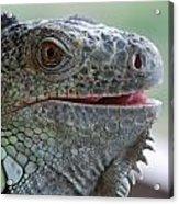 Happy Lizard Acrylic Print