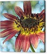 Happy Red Sunflower Acrylic Print