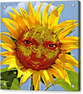 Happy Sunflower Acrylic Print