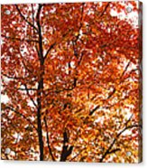 Happy Tree Acrylic Print