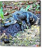 Hard Day In The Swamp - Digital Art Acrylic Print