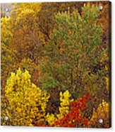 Hardwood Forest With Maple And Oak Acrylic Print