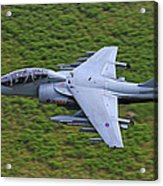 Harrier Low Level Acrylic Print
