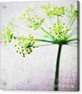 Harvest Starburst 2 Acrylic Print by Linda Woods