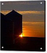 Harvest Sunrise Acrylic Print