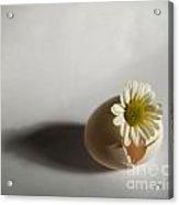 Hatching Flower Photograph Acrylic Print