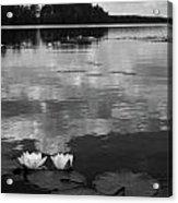 Haukkajarvi Water Lilies In Bw Acrylic Print