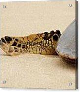 Hawaiian Green Turtle Rear Tail Fin Acrylic Print
