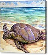 Hawaiian Green Turtle Acrylic Print