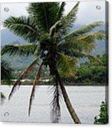 Hawaiian Palm Acrylic Print