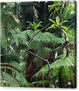 Hawaiian Rainforest Acrylic Print