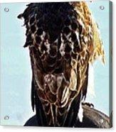 Hawk 3 Acrylic Print