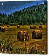 Hay Bales II Acrylic Print