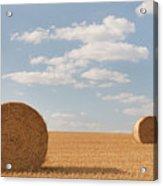 Hay Barrels In Burgundy Region Acrylic Print by Niall Sargent