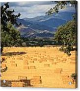 Hay Field With Mountain Background Acrylic Print