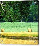 Hay Landscape Acrylic Print by France Laliberte