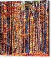 Hdr- Autumn Leaves Acrylic Print