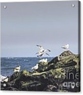 Hdr Seagulls At Play Acrylic Print by Pictures HDR