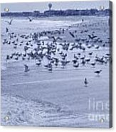 Hdr Seagulls At Play In The Sand Acrylic Print by Pictures HDR