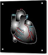 Heart Anatomy, Artwork Acrylic Print