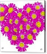 Heart From  Pink Daisies Acrylic Print