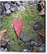 Heart Leaf Acrylic Print