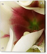 Heart Of A Lily Acrylic Print