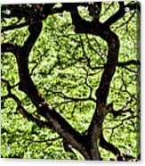 Heart Of The Forest Acrylic Print
