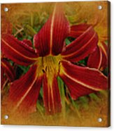 Heart Of The Lily Acrylic Print