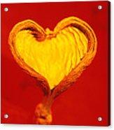 Heart-shaped Nutshell Acrylic Print