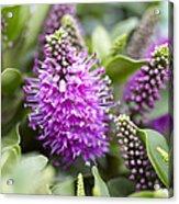 Hebe Dona Diana Flowers Acrylic Print