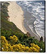 Heceta Beach View Acrylic Print