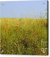Hedgerow Flowers Acrylic Print